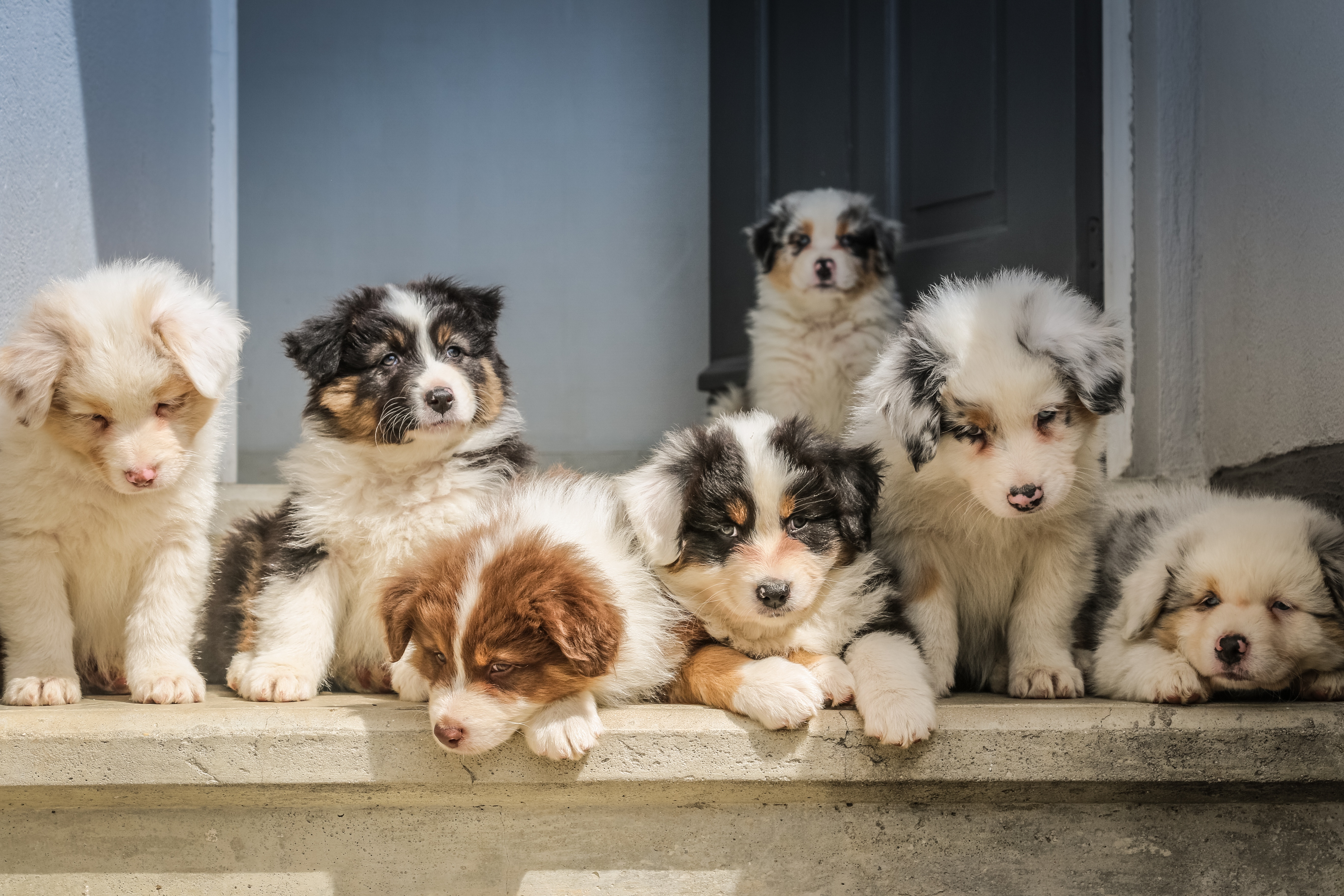 Animal Welfare FAQ | Iowa Department of Agriculture and Land