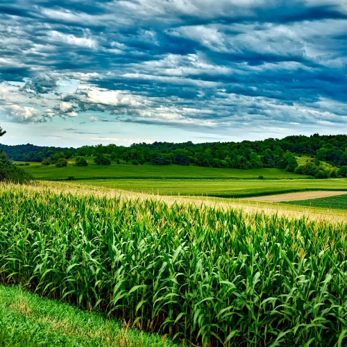 photo of corn ans soybean landscape